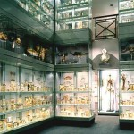 The Hunterian Museum - Crystal Gallery